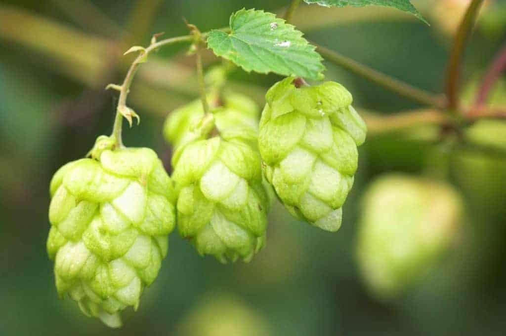 Bier en biercultuur in België dankzij belastingen, wetten en regels
