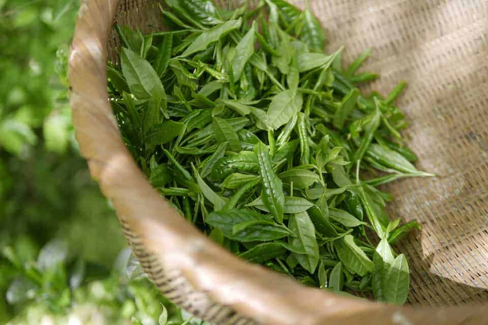 groene thee royal teas