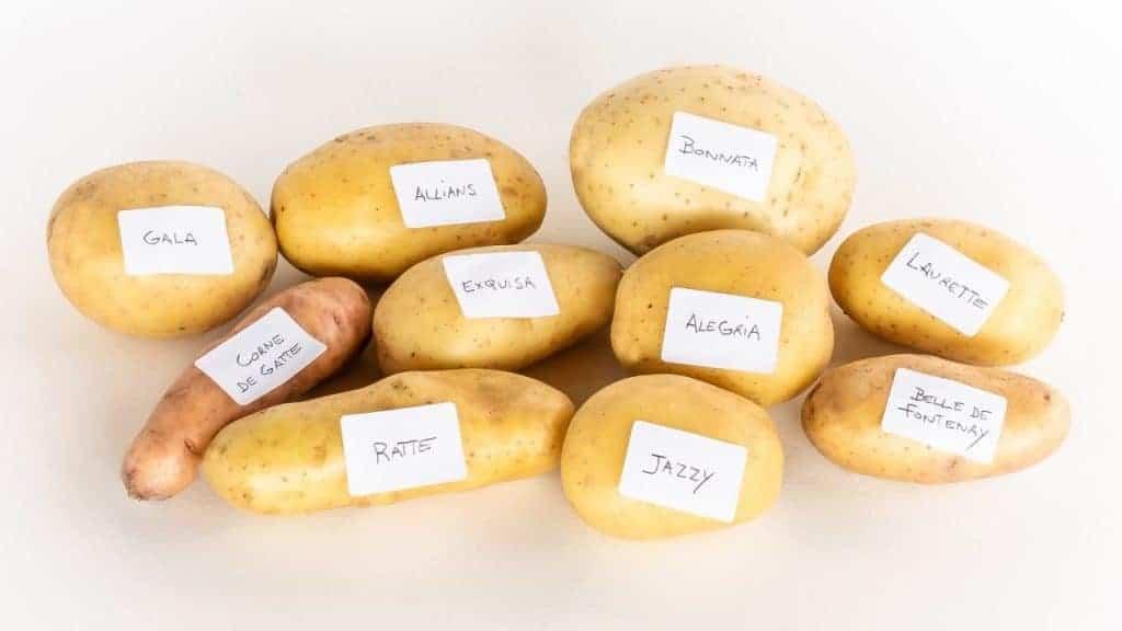 aardappelen Horeca Webzine
