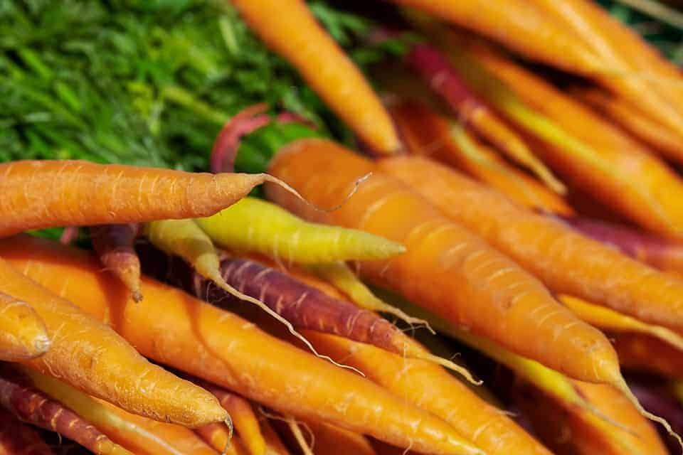 wortelen frank fol horeca webzine