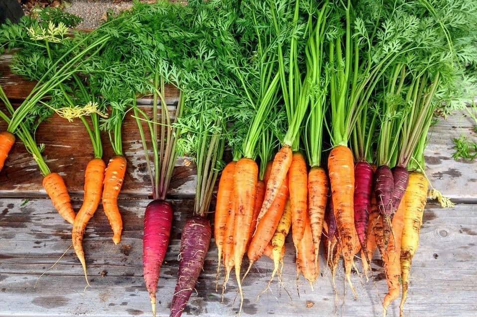 wortelen wortel frank fol