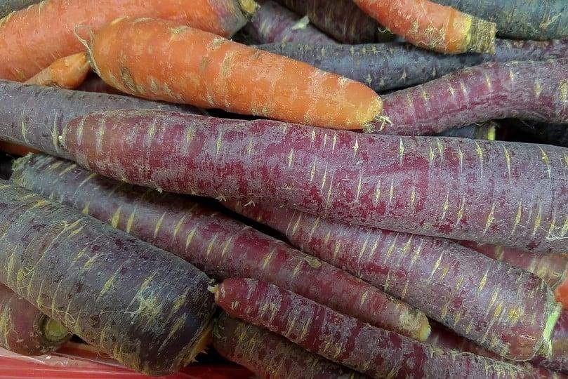 wortelen wortel zwart paars