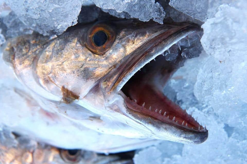 heek mooie meid vis de maand juni patrick caignau