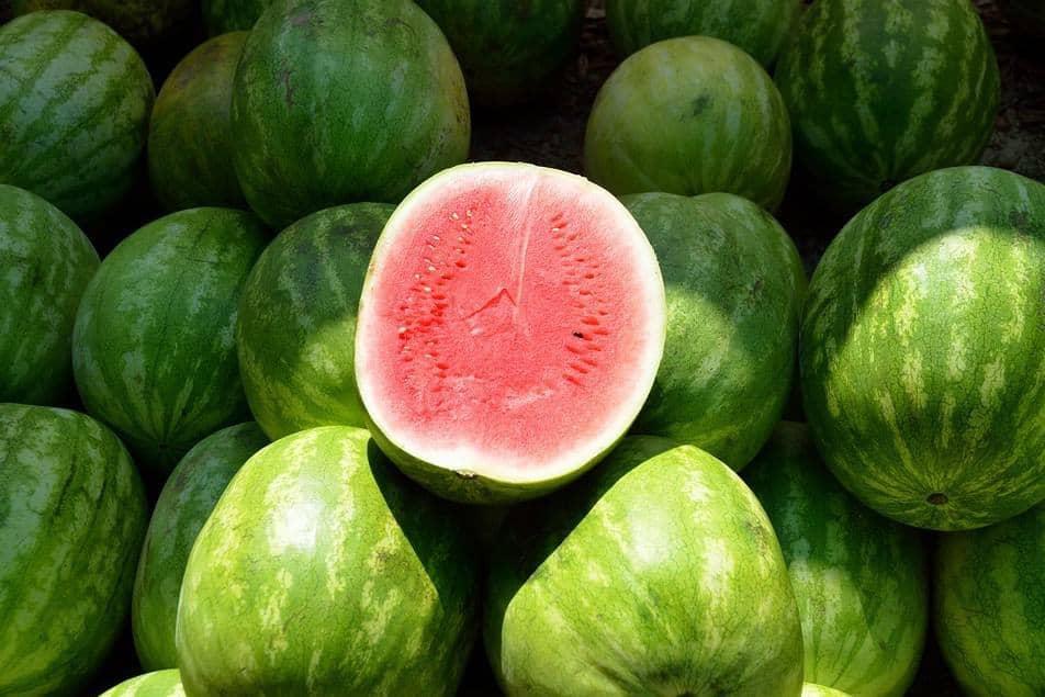 watermeloen fruit van het jaar frank fol
