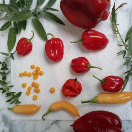 hot-pepers-habanero-jalapeno-sugarrushpeach-carolinareaper